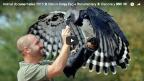 Birds of Prey - Eagle Documentary