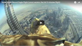 Live Video of World Record Eagle Flight